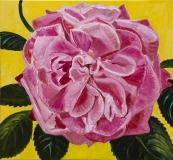 Rose - gul baggrund, 75x70