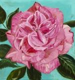 Rose, 75x80