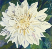 Hvid georgine, 85x80
